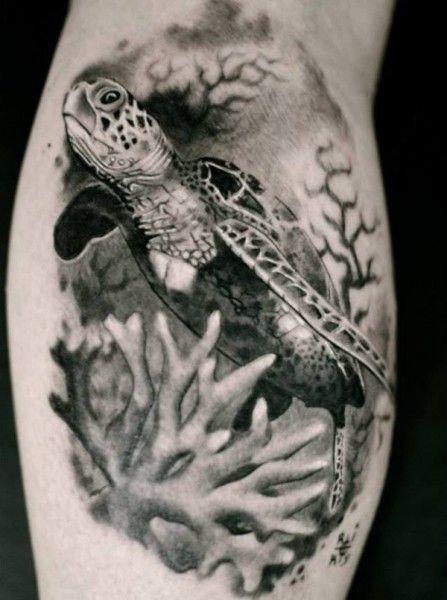 Tatuagem De Tartaruga Dicas Especiais Tatuagem Na Perna