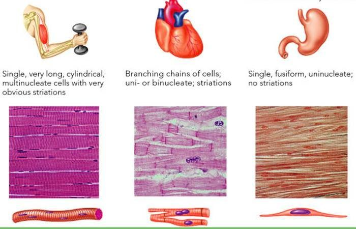 18++ Three types of muscle contractions inspirations