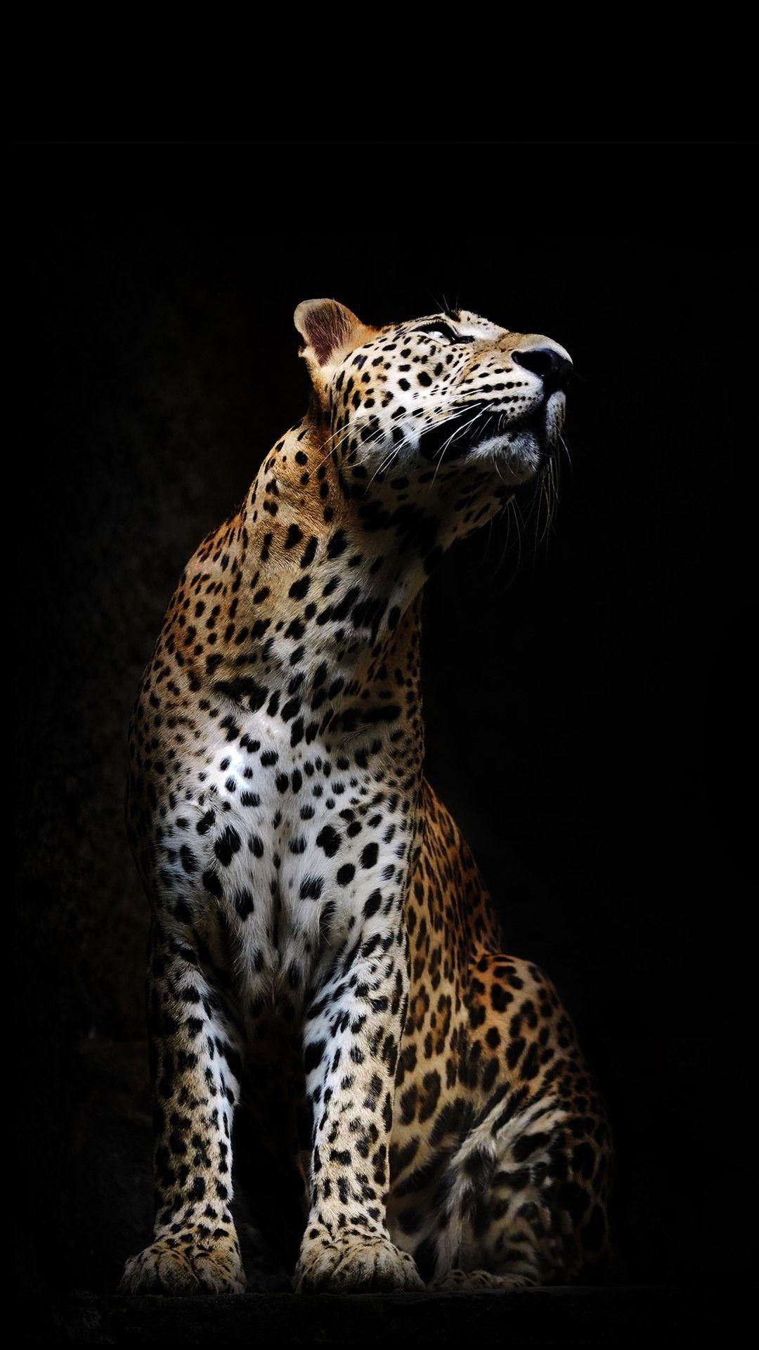 Pin de H. Liebe en Tiere | Pinterest | Animales, Anatomia ...