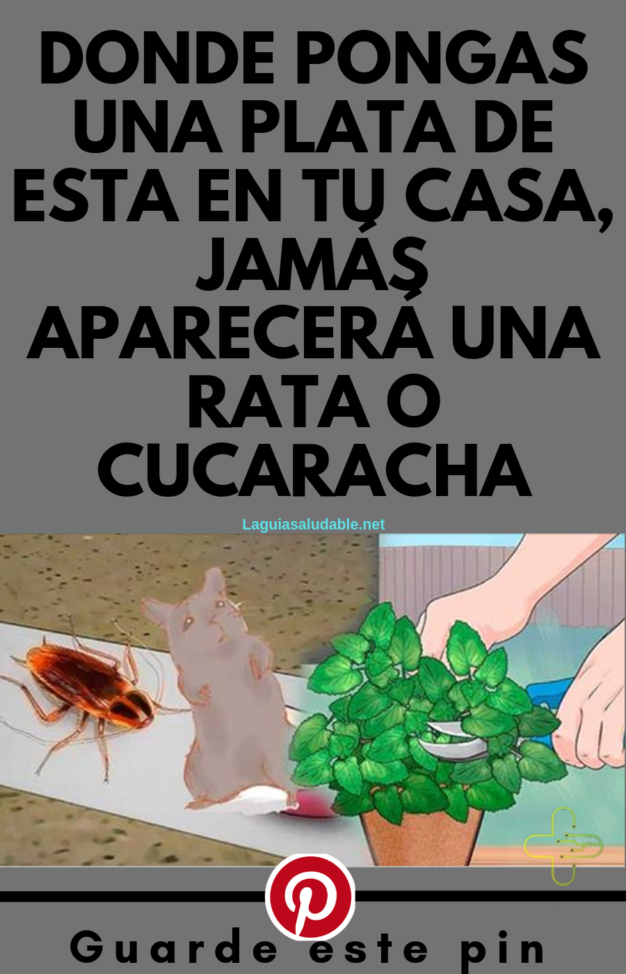 Como Acabar Con Las Ratas En El Campo Donde Pongas Una Planta De Esta En Tu Casa Jamas Aparecera Una