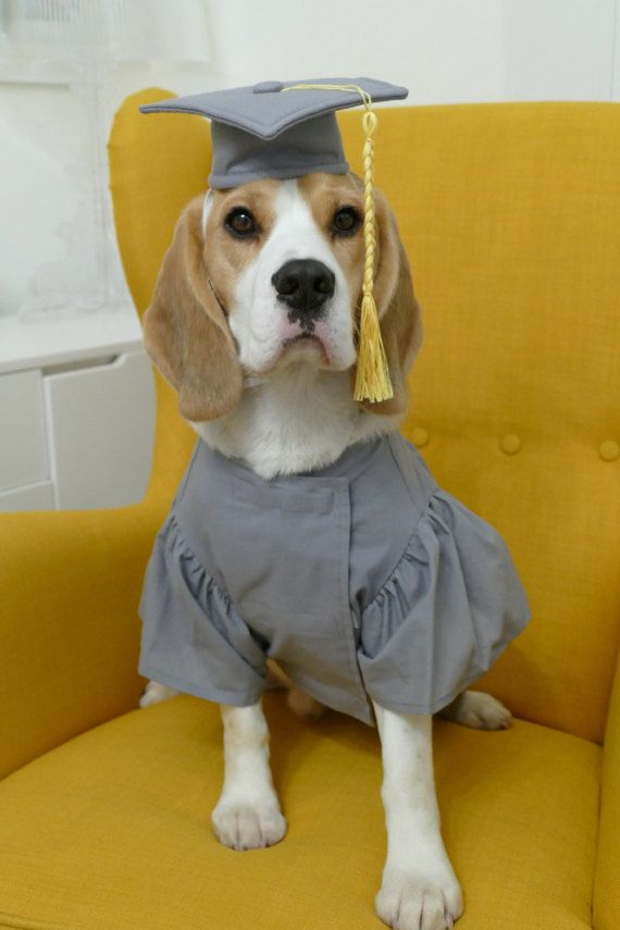 Pet Graduation Cap and Gown Dog Cap and Dog by WoofsandRuffles ...