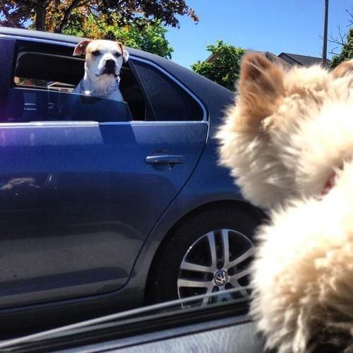Area Dog Victim of Drive By Woofing