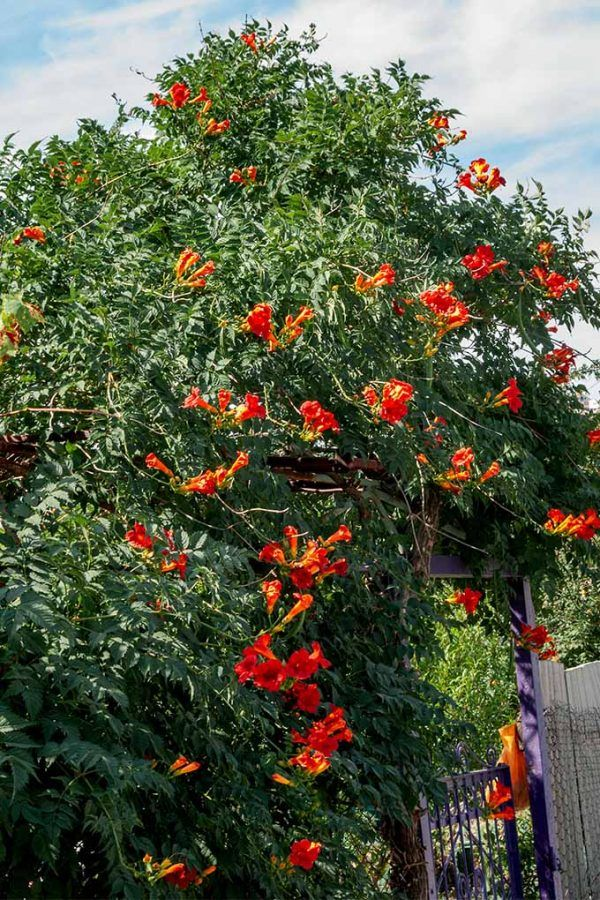 Best Full-Sun Flowering Perennials for Zones 7-11 | Garden ...