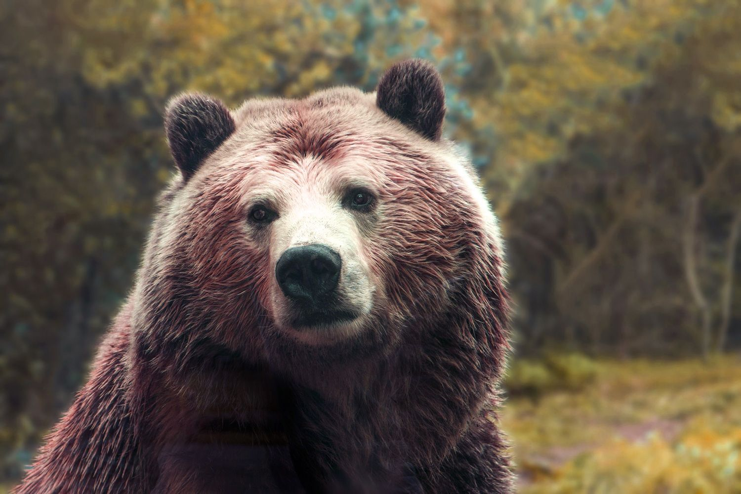 Symbolic Bear Meaning And Totem Insights On Your Spirit Animal Bear Meaning Bear
