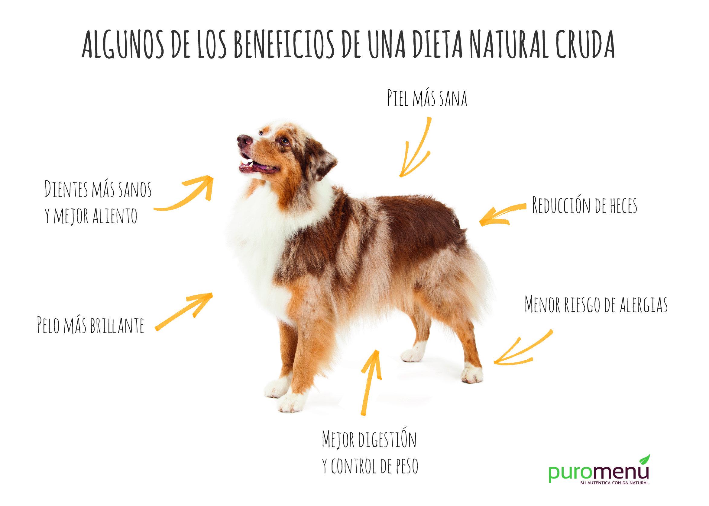 Los beneficios de una ta BARF en tu perro