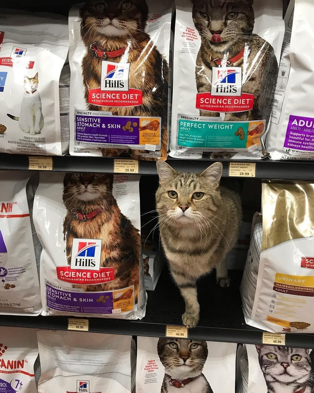 Time For A Game Of Where S Yardley Petvalu91 Petvalu Caturday Kitten Cat Catfood Toronto Ontario Canada Kittens Cats Cat S Cats Cat Food