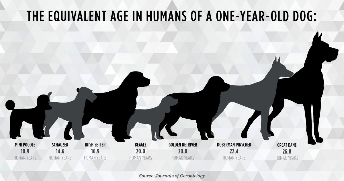 Flaws In The 7 Year Rule How Accurate Are Dog Years Dog Years Dogs Old Dogs