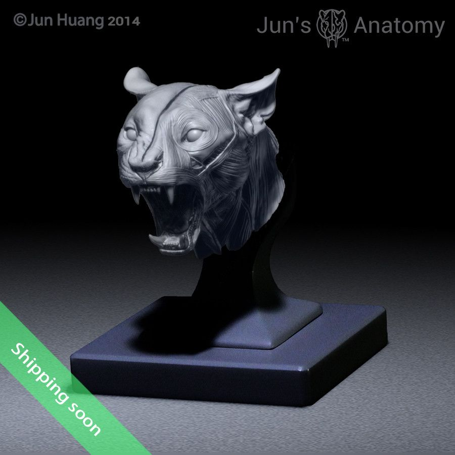 Cougar Anatomy Model open-mouth \