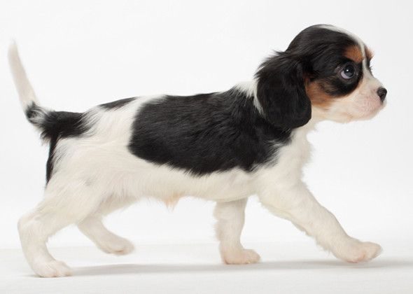 Best Family Dogs That Don T Shed When Choosing The Best