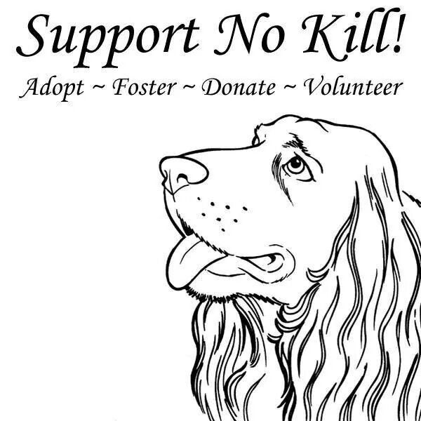 Support No Kill Adopt Foster Donate Volunteer The Fosters