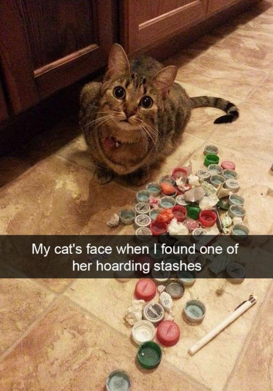 Snapchats of cats
