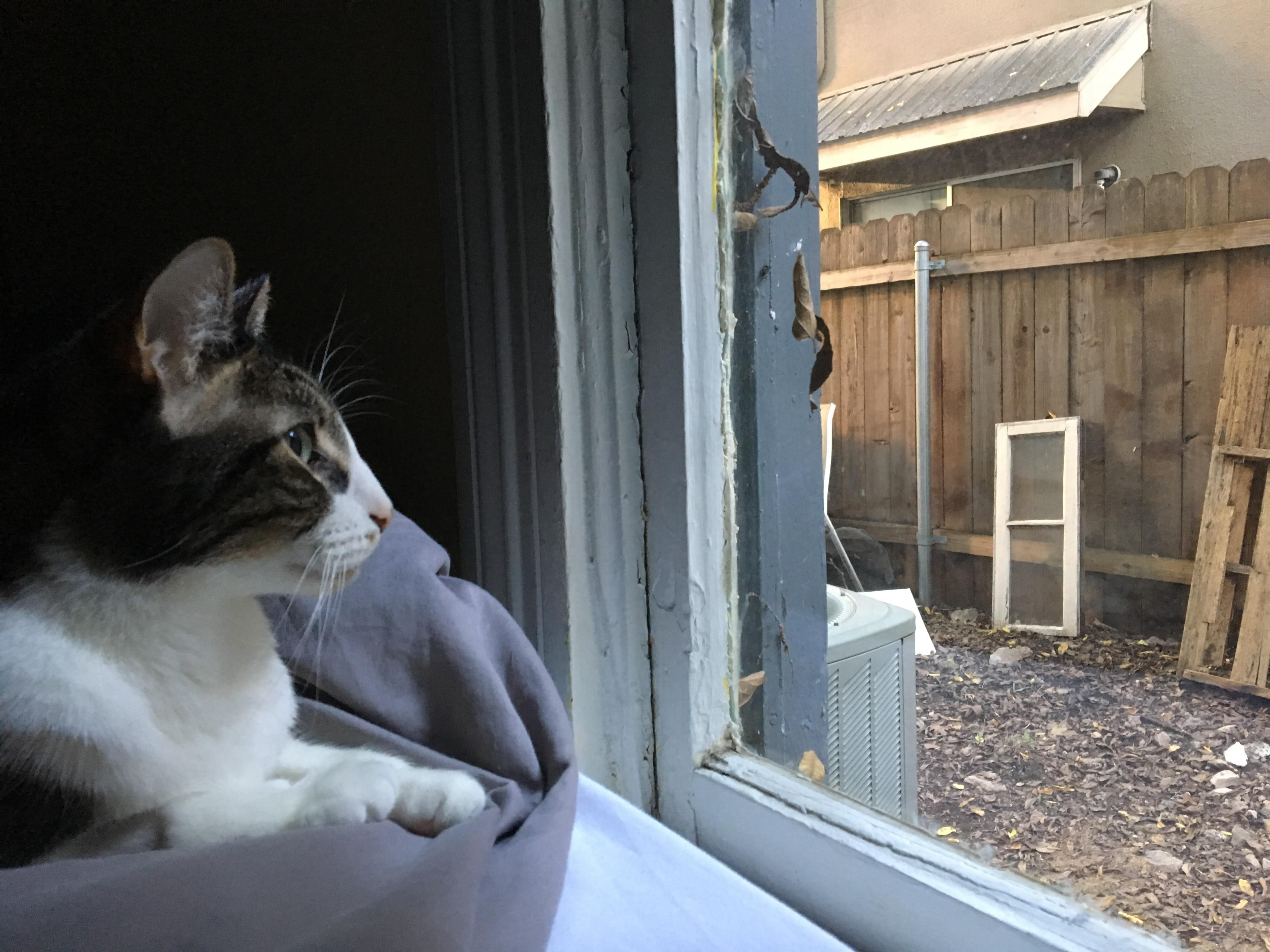 Good morning #aww #cute #cutecats #catsofpinterest #cuddle #fluffy #animals #pets #bestfriend #boopthesnoot