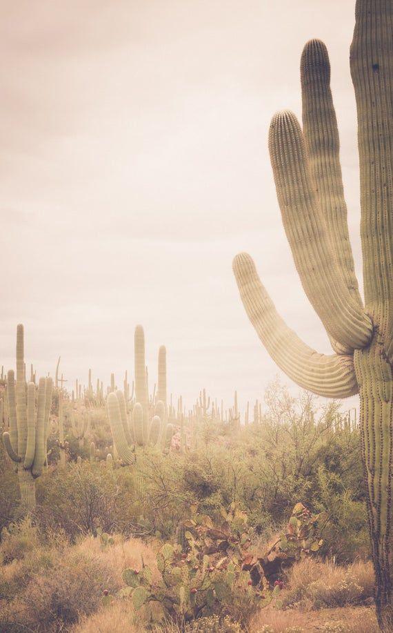 Photo of Arizona photography, cactus photography, saguaro national park, saguaro cactus, southwestern decor,
