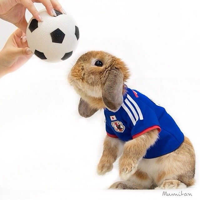 Pin for Later: This Adorable Bunny Dresses Better Than You Could Ever Hope To PuiPui loves to play soccer — or at least try to.