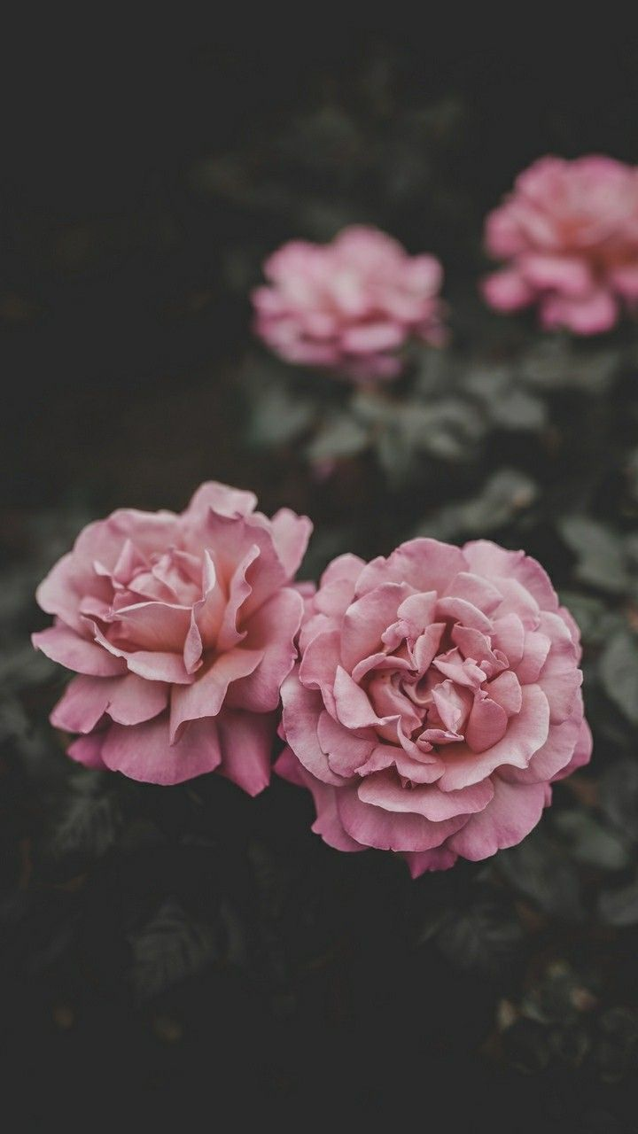 Flower iphone wallpaper by Hannah Sanfilippo on Photography