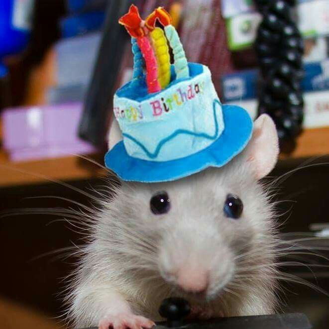 You say it's your birthday? Well, happy birthday to you! - Page 12 F97104f1d13c30f60cd7f606b30807d9