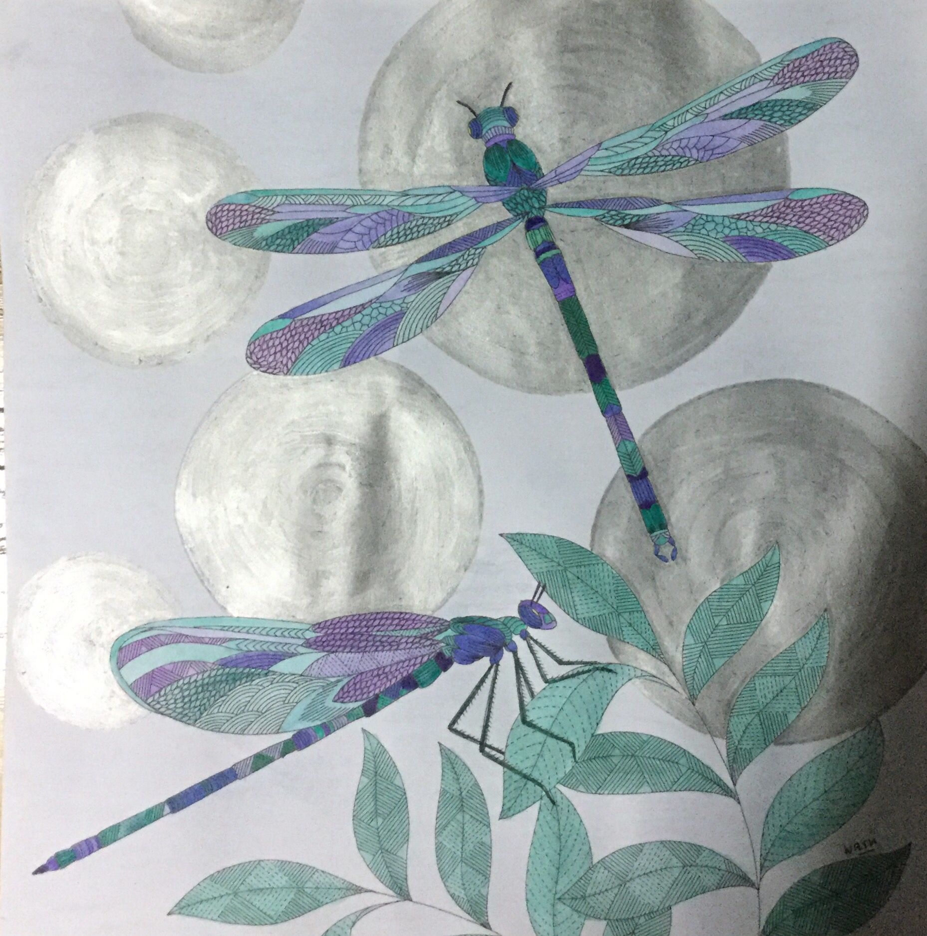 My Colouring Millie Marotta Animal Kingdom Dragonfly