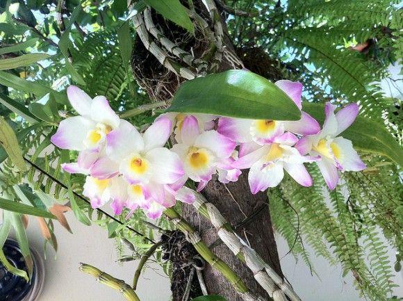 Cultivo de orqu deas conoce todas sus exigencias ideas for Jardines de orquideas