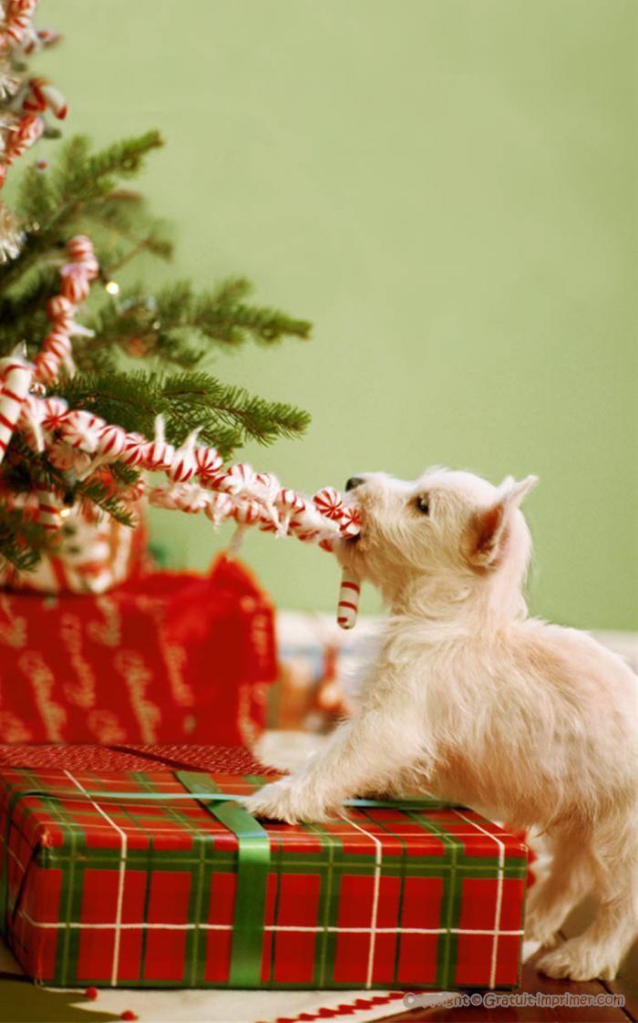 Image de noel gratuite sapin cadeau de noel noel christmas animals westies et christmas dog - Image de noel gratuite ...
