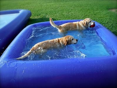 Quot The Ultimate Dog Pool Is Made Of Rugged Puncture