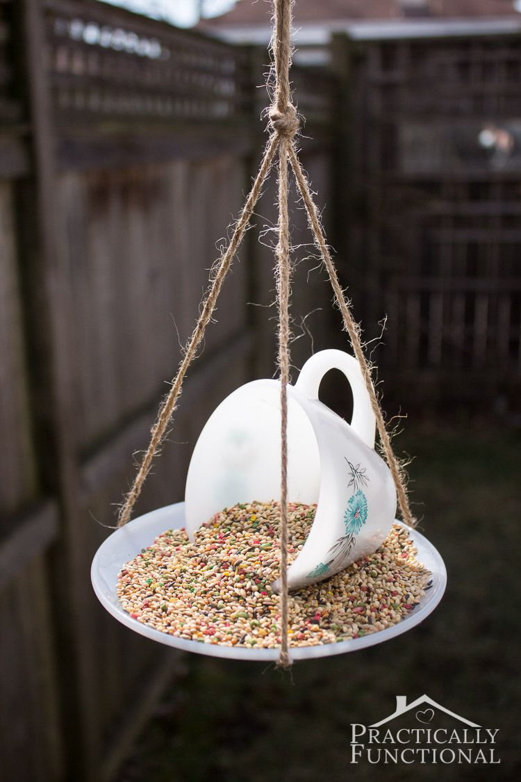 bird branch wing color images wildlife titmouse feeder nature photo green feeders en wood wall mealtime window expensive food blue free natural spring