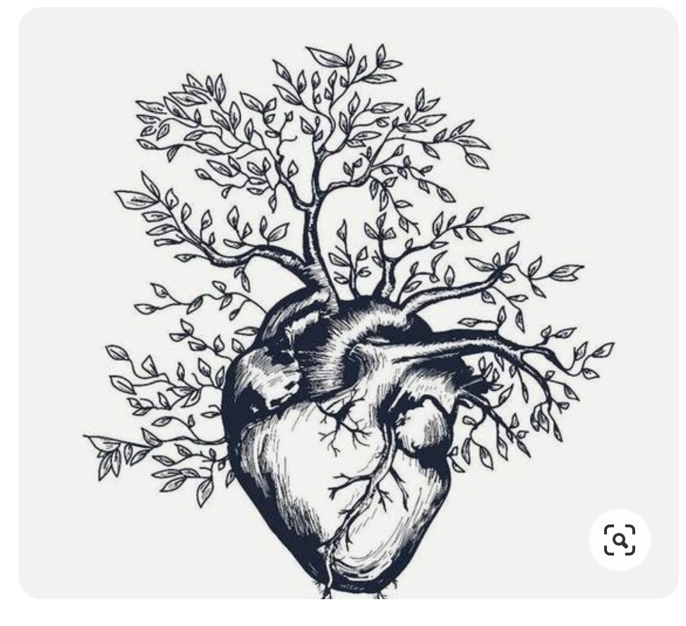 Pin By Kyle Astrein On Heart Drawings Human Heart Tattoo Anatomical Tattoos Human Heart Drawing