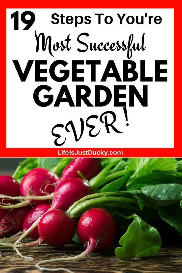 19 Tips For Beginning Gardeners – Vegetable garden planner