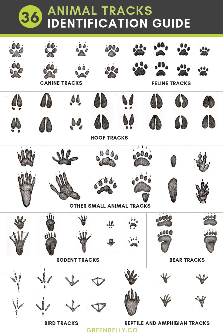 How to Identify Animal Tracks recommendations