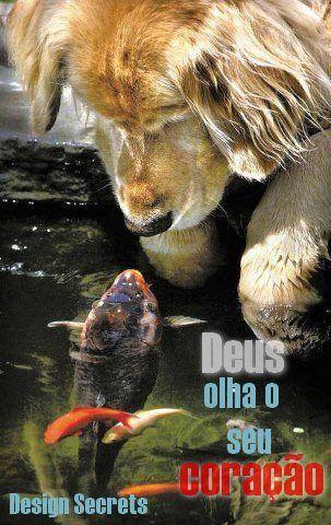 Cão e peixe