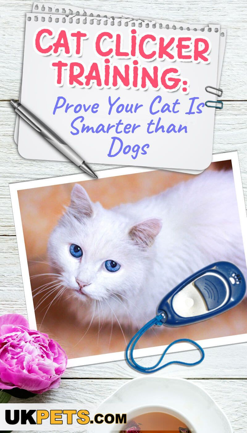 Cat Clicker Training Prove Your Cat Is Smarter Than Dogs Dog Clicker Training Cat Training Buy A Cat