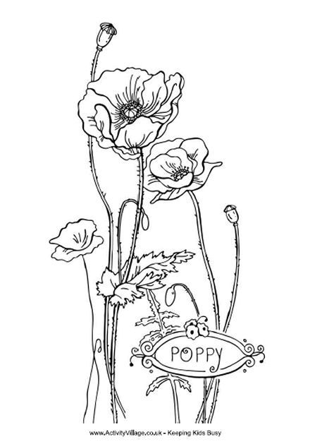 Drawing On Kys Wall Poppy Coloring Page Poppy Drawing Flower Coloring Pages
