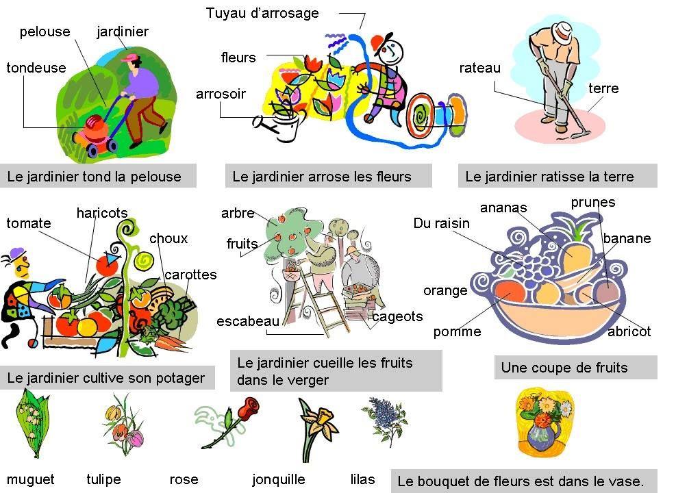 Le Vocabulaire Du Jardin Arrosage Pelouse Arrosoir Tuyau Arrosage