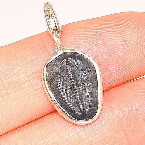 Whole trilobite pendant accessories pinterest fossils whole trilobite pendant mozeypictures Image collections