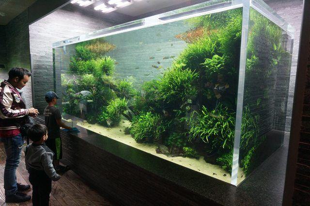 Takashi Amano's floor in Sumida Aquarium, Tokyo | Takashi ...