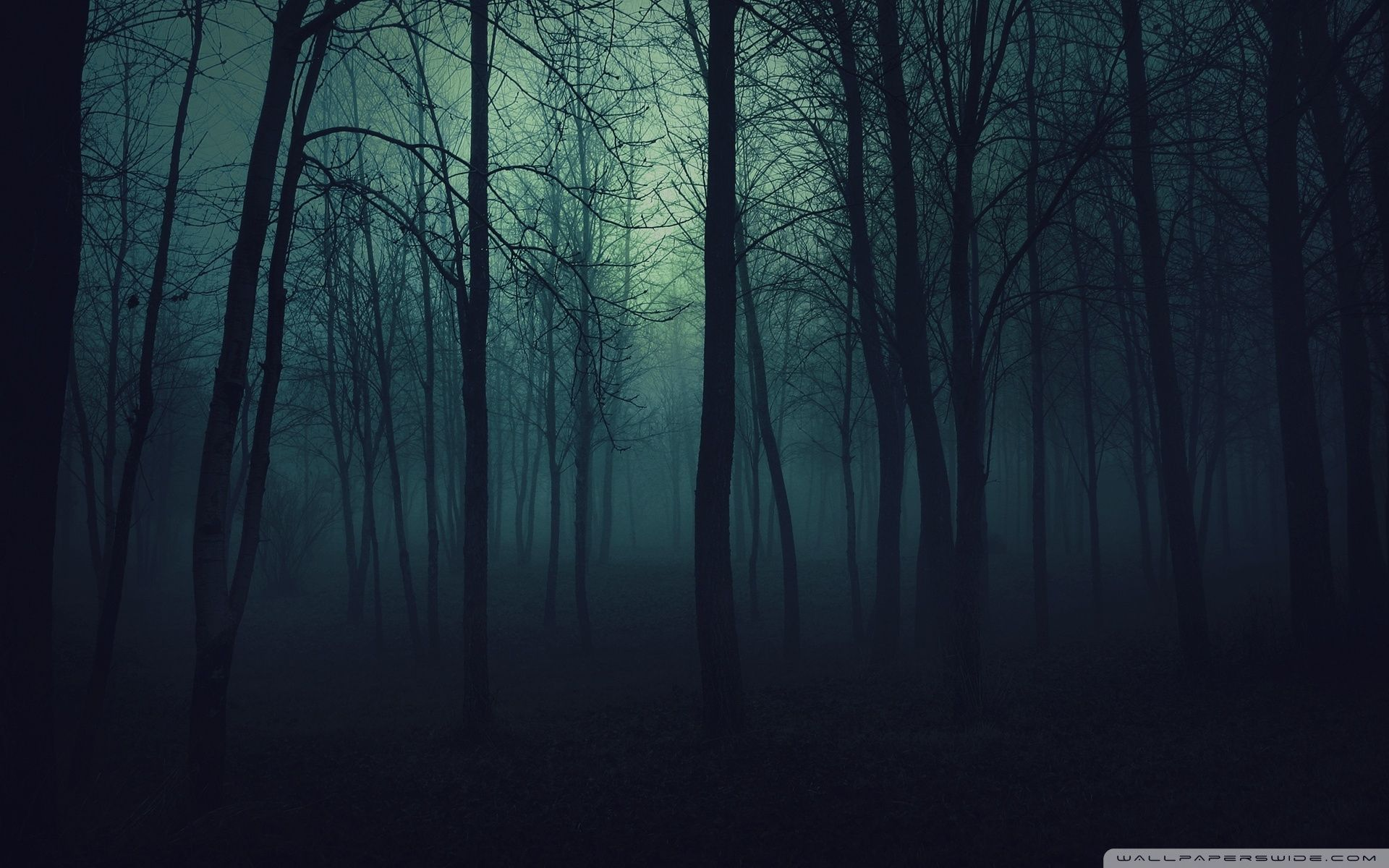 10 Latest Dark Forest Wallpapers Hd Full Hd 1920 1080 For Pc Background Forest Wallpaper Dark Wood Background Forest Background