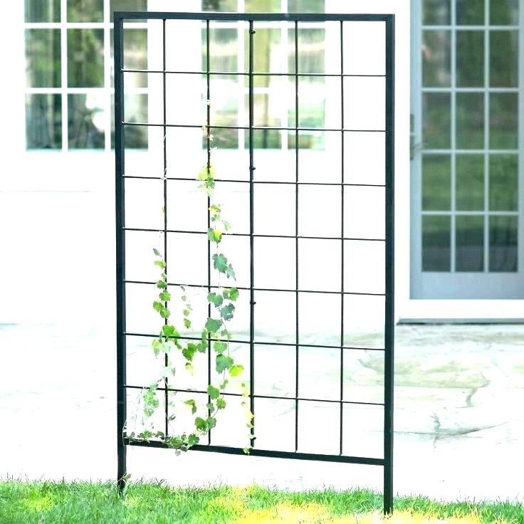 Free Standing Garden Trellis: Free Standing Trellis Freestanding For Clematis