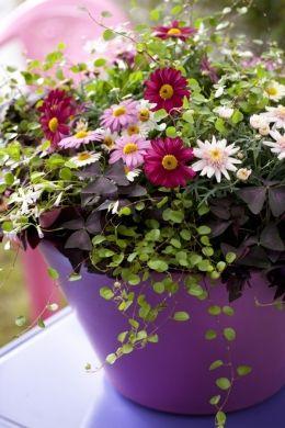 Ogrod W Doniczce Kompozycje Kwiatowe Na Balkon Artykuly Flower Pot Garden Container Flowers Flower Pots