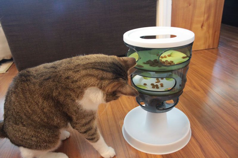How Long Can You Leave Dry Cat Food Out? How Should You