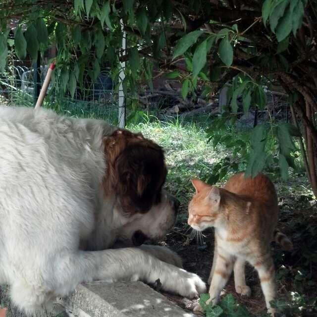 Giotto e il gattino!!!!