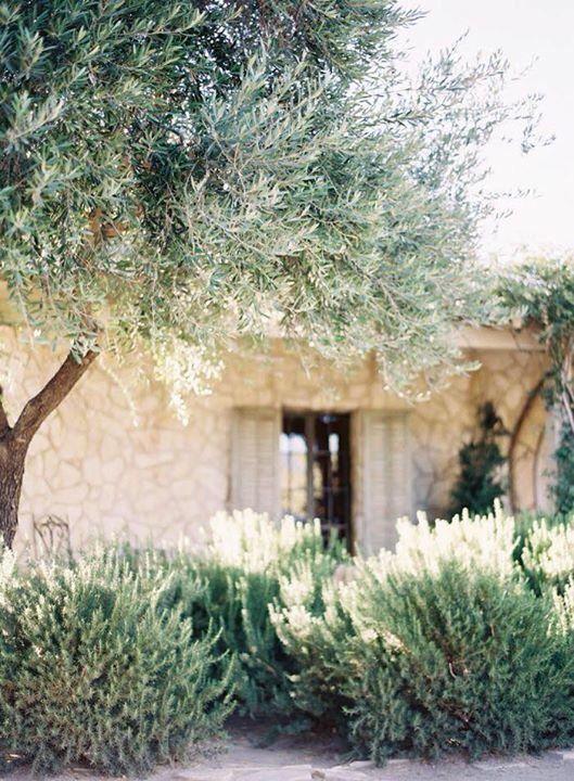 Pin von sabrina feischl auf garten jard n mediterr neo for Gartengestaltung olivenbaum