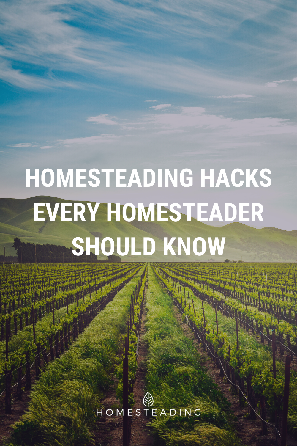 10522 Best Homesteading Ideas Images In 2020 Homesteading Off