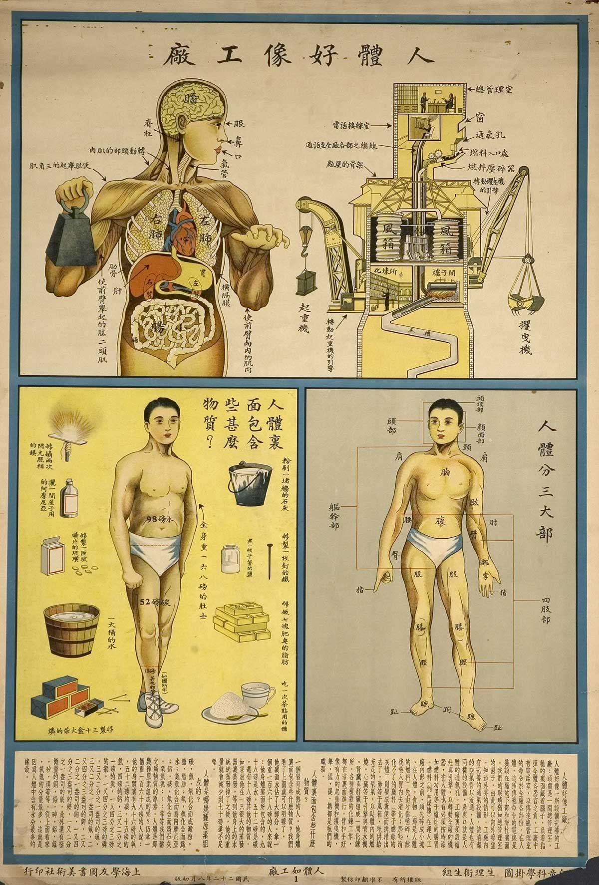 anatomy poster - Google Search   graphic & -   Pinterest   Anatomy