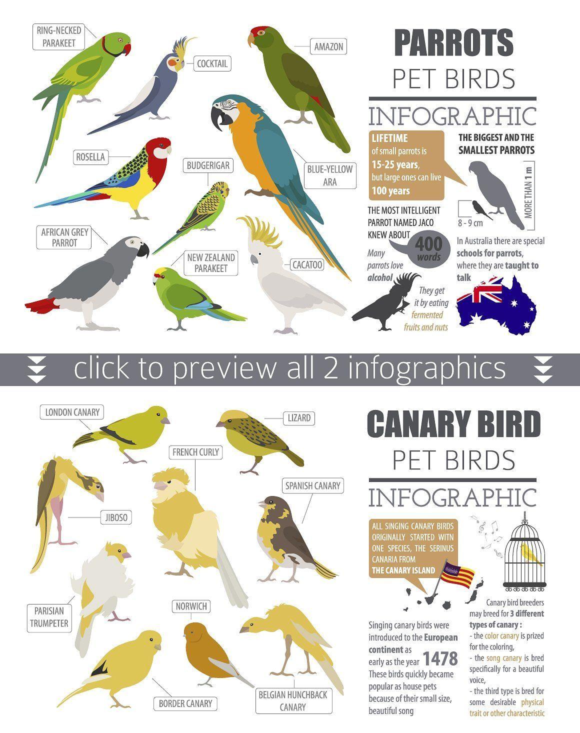 Pet Birds Illustrations Set In 2020 Pet Birds Bird Illustration Budgerigar