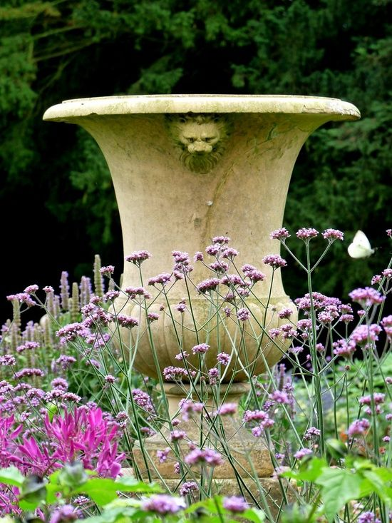 (via g a r d e n s / Verbena bonariensis around great urn)