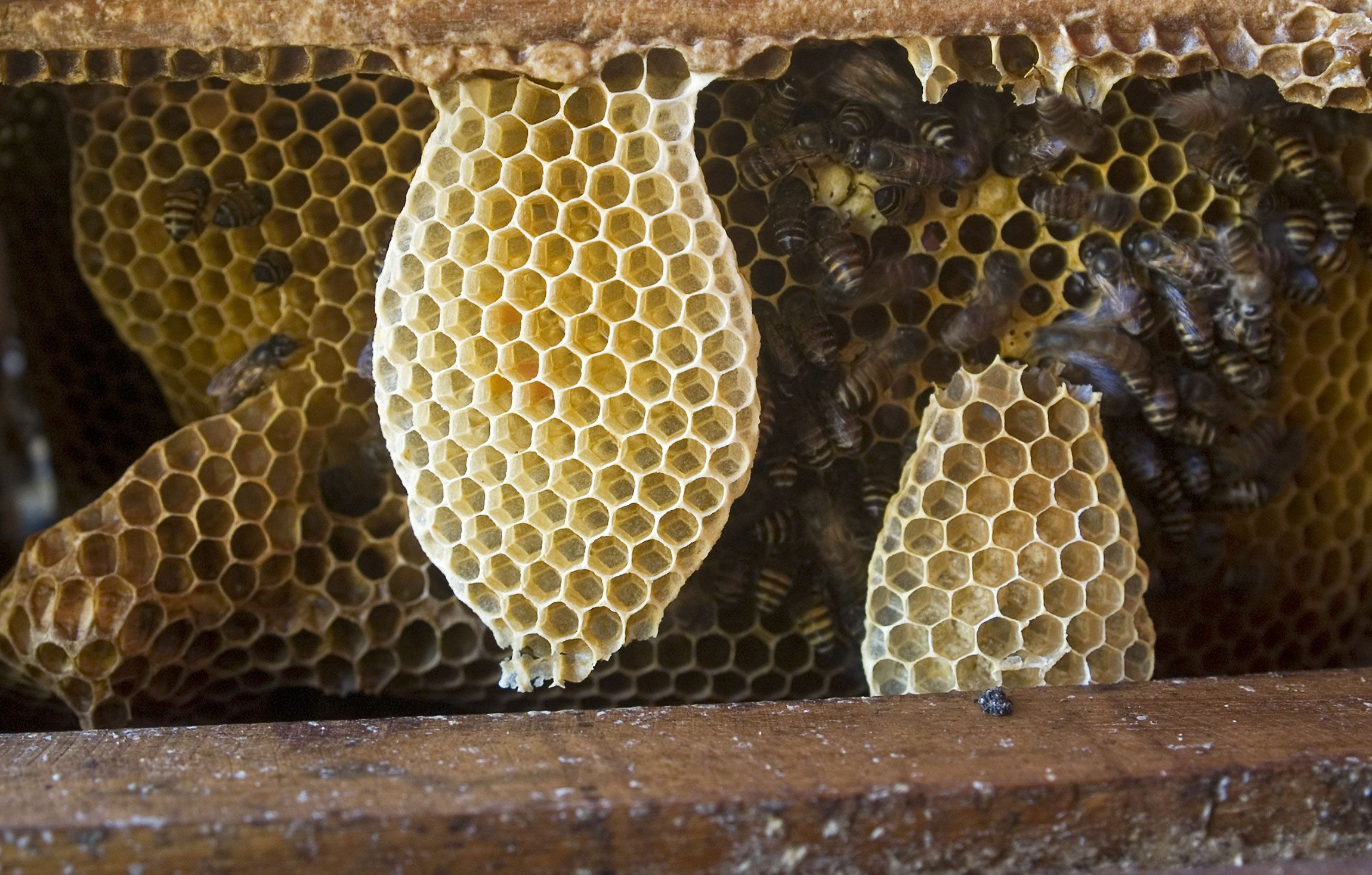 The perfect geometry of honeycombs. A beauty! | Amazing ...