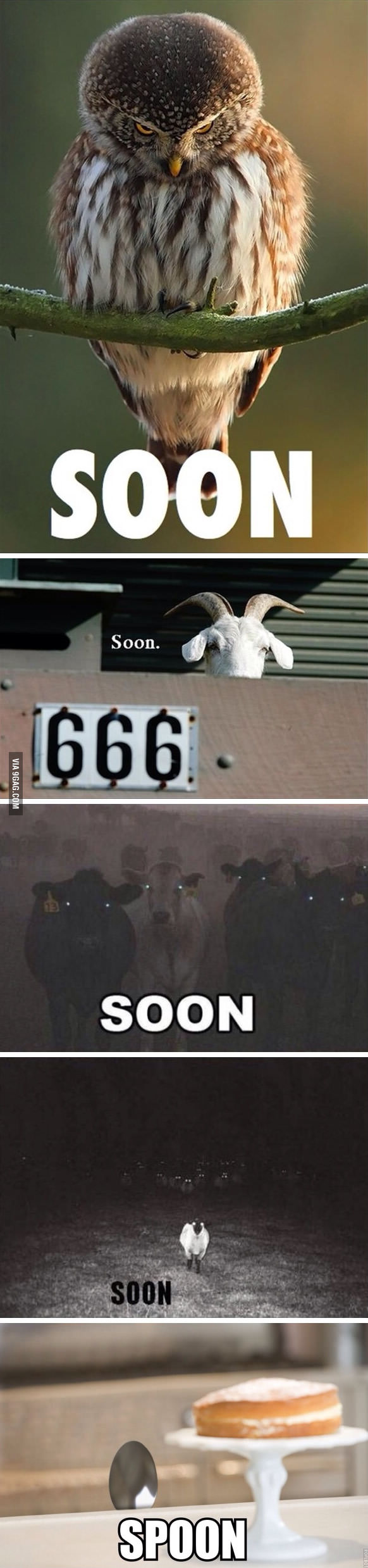 Soon. Soon. What? Funny pictures, Funny photos, Funny cute
