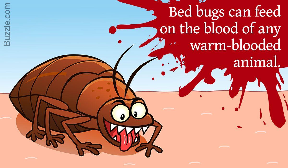 Bed Bug Betty Meme