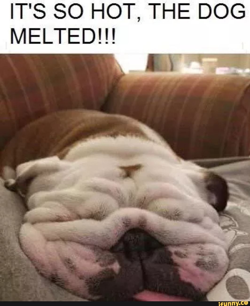 Hot Dog Memes : memes, MELTED!!!, IFunny, Funny, Memes,, Animals,, Bulldog