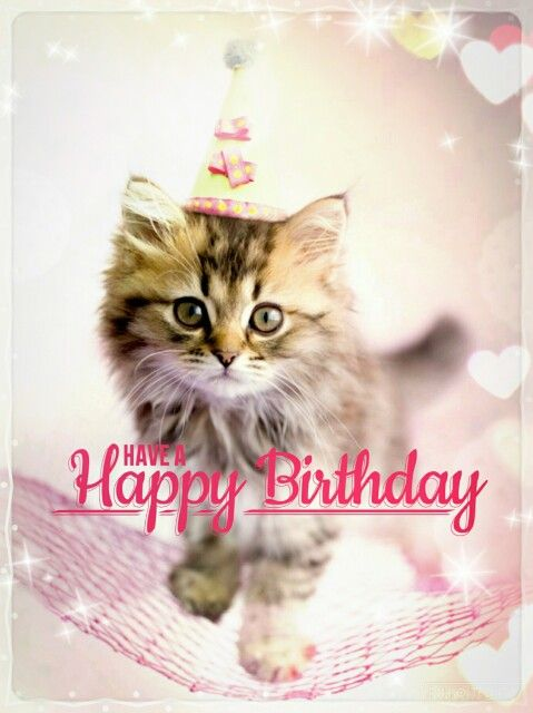 Happy Birthday With Images Happy Birthday Cat Happy