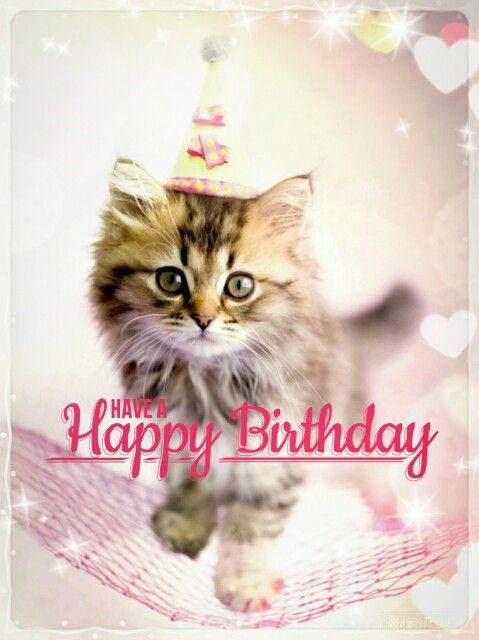 Happy Birthday Kitten Images : happy, birthday, kitten, images, Happy, Birthday, Kitten, Birthday,, Photos